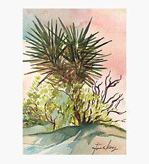 Joshua Tree in California Photographic Print
