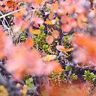 Colorful twigs von nurmut