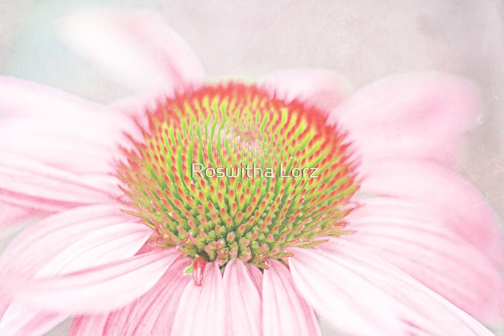 Echinacea macro by RosiLorz