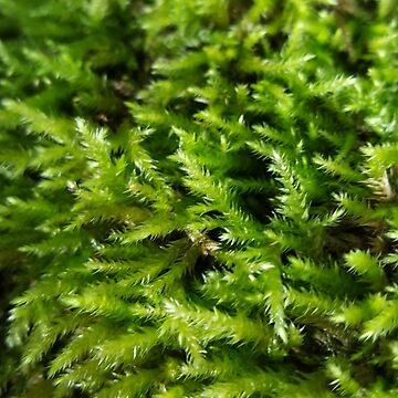 Green moss by Sheepandwolf