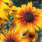 Summer Sunshine by Monnie Ryan