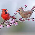 Cardinals on Blossoming Branches by Bonnie T.  Barry