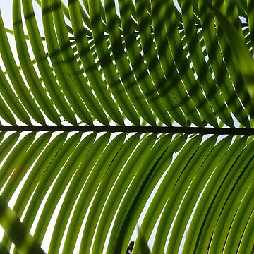 shade of greenery by RestonsHumains