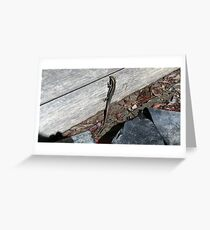 Eastern Water Skink - Blue Mountains Greeting Card