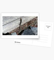 Eastern Water Skink - Blue Mountains Postcards