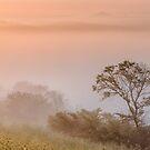 Tuscany mist3 by Vicki Moritz