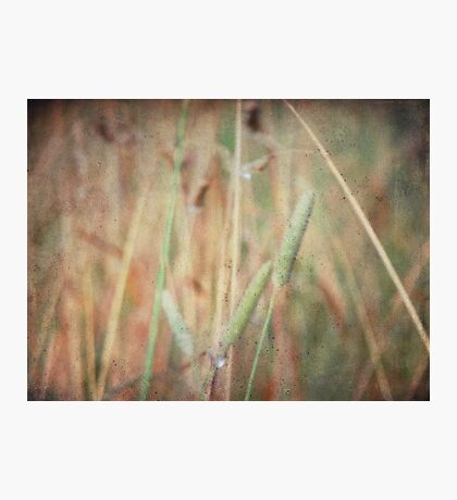 wild grasses 2 Photographic Print