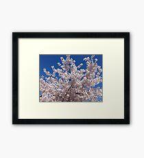 Plum Blossoms Against the Sky Framed Print