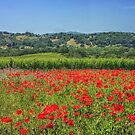 Poppy vineyards by Owed To Nature