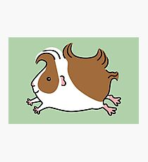 Leaping Guinea-pig ...Brown and White Photographic Print