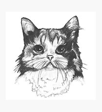 Hey there Kitty Cat!! Photographic Print