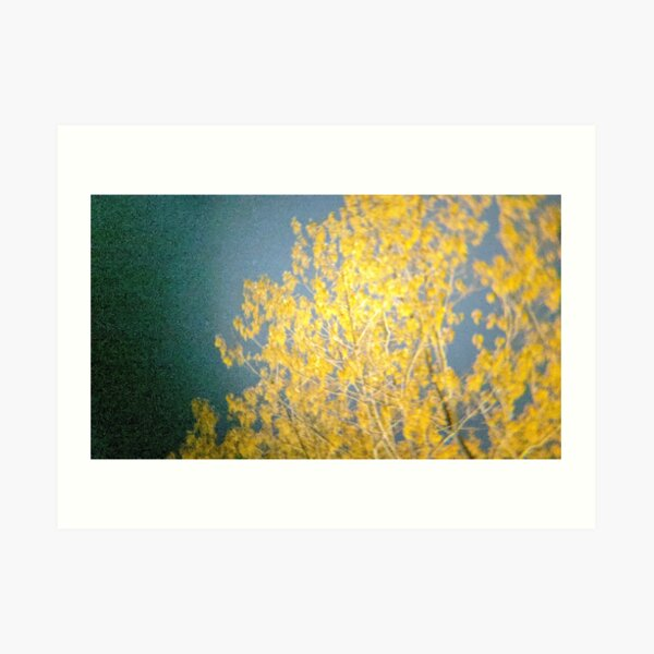 Yellow Tree at Night Art Print