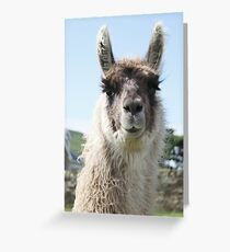 An Irish llama Greeting Card
