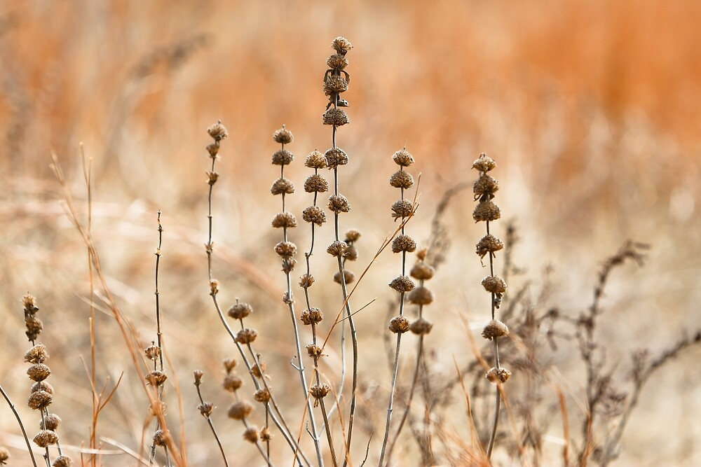 Dry Wild Flowers and Grass by Daniel Ray Thibodeaux
