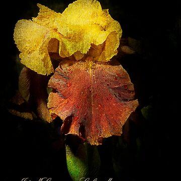 "Iris ""Supreme Sultan"" by Zigzagmtart"