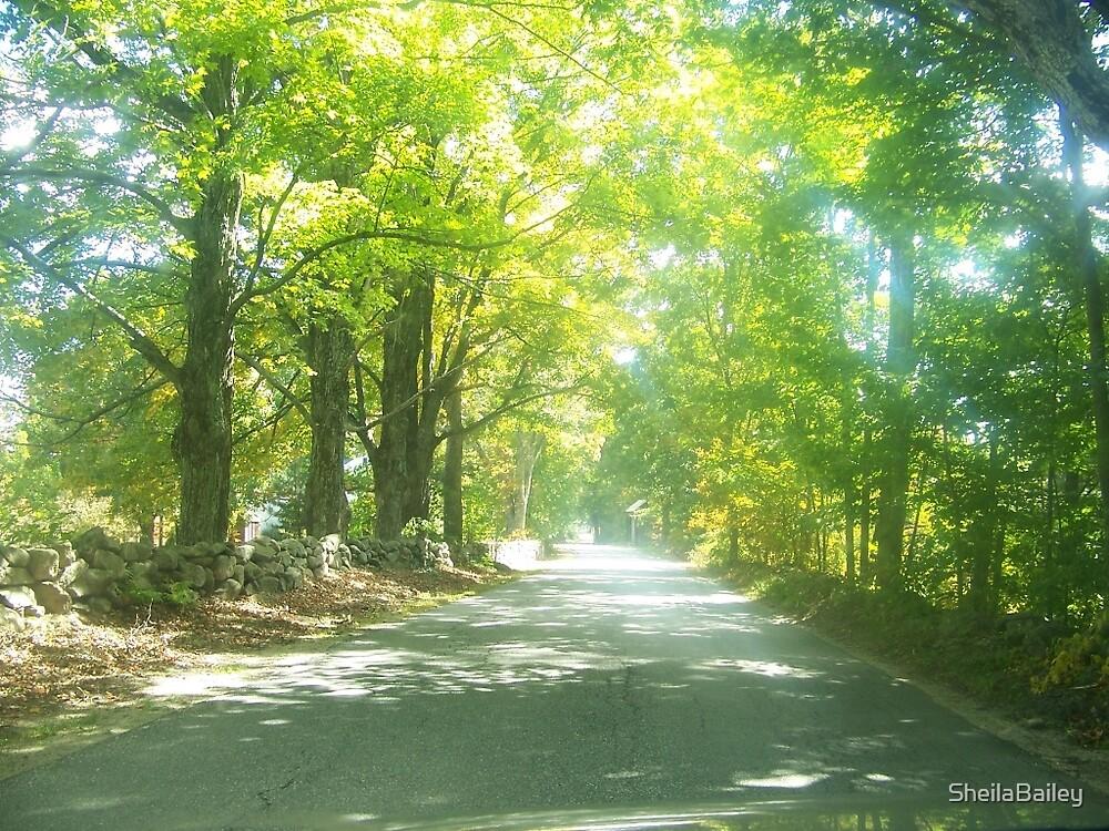 Crowley Road #3  summer by SheilaBailey