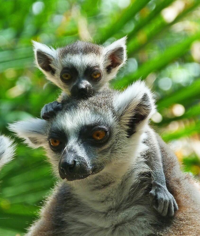Baby Lemur Views The World by Margaret Saheed