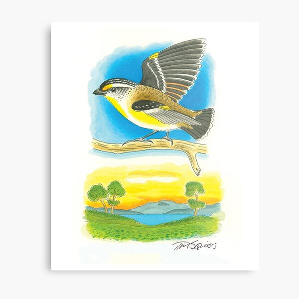 Striated Pardalote Metal Print