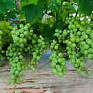 On the grape vine by Alex  Motley