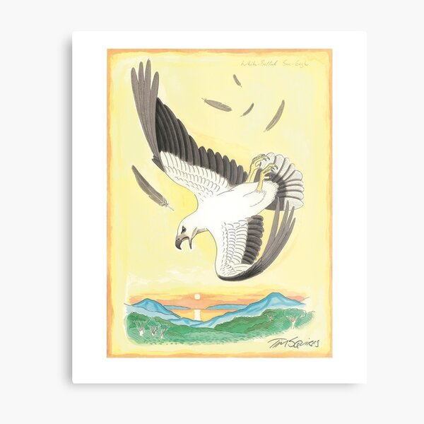 White-bellied Sea-eagle Metal Print