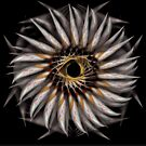 """""""Feathered Flower © Brad Michael Moore 2008"""" by Brad Michael Moore"""
