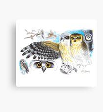 Southern Boobook Owl Canvas Print