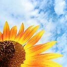 Sun(flower) rising  by Bine