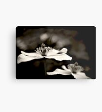 Clematis flower (in black and white) Metal Print