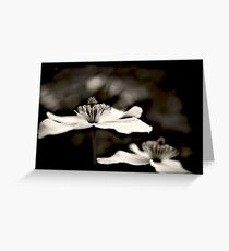 Clematis flower (in black and white) Greeting Card