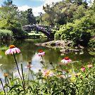 Pond: NY City by john forrant