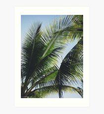 Tropic Art Print