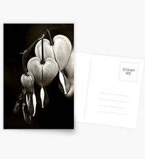 Bleeding Hearts (Dicentra) flowers in black and white Postcards