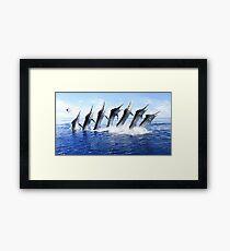Black Marlin Jump Sequence Framed Print