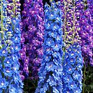 Blue and Purple Delphinium Border by Stephen Frost