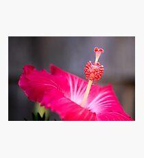Red Hibiscus Macro Flower Photographic Print