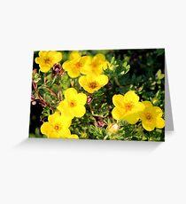Shrubby Cinquefoil - Dasiphora fruticosa subsp. floribunda (Pursh) Kartesz Greeting Card
