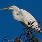 Kink Neck Egret by byronbackyard