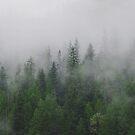 The Mist by Melissa Lulashnyk