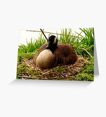 Nesting Canada Goose Greeting Card