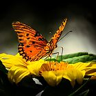 Passion butterfly at night by Zina Stromberg