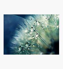 Dandelion Drama Photographic Print