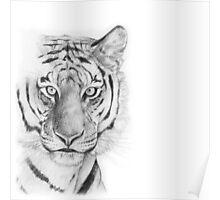 Tiger Poster