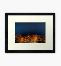 Orange blossoms Framed Print