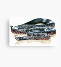 Red Belly Black Snake Canvas Print