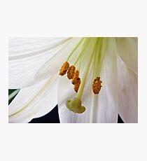 Lily Flower Macro Photographic Print