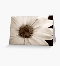 White Chrysanthemum sepia flower Greeting Card