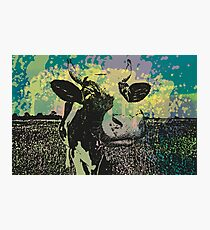 BD COW Photographic Print