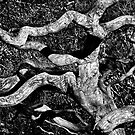 Twisted Limbs by cclaude