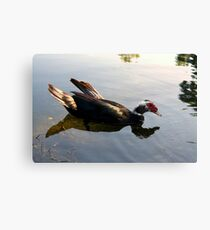 Just Floating By Canvas Print