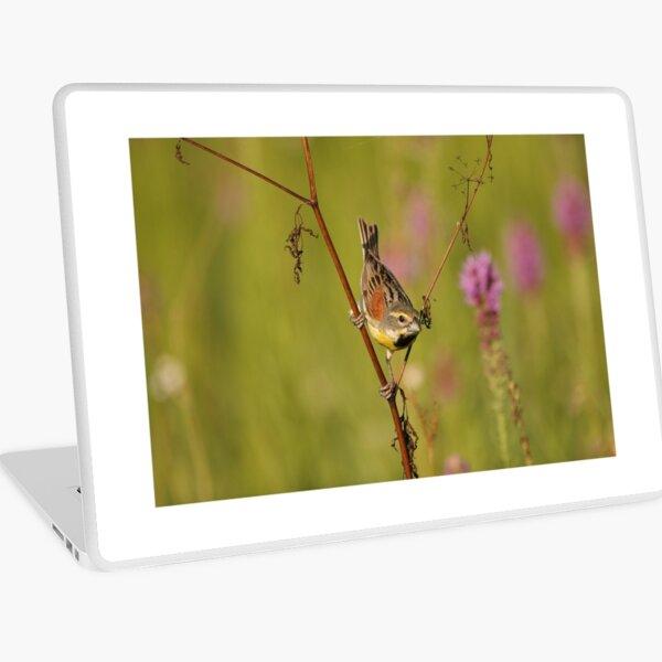 Dickcissel bird in an Arkansas Prairie. Laptop Skin
